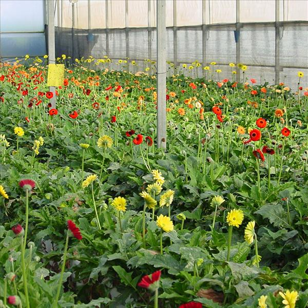 Image result for پرورش گل در گلخانه هیدروپونیک